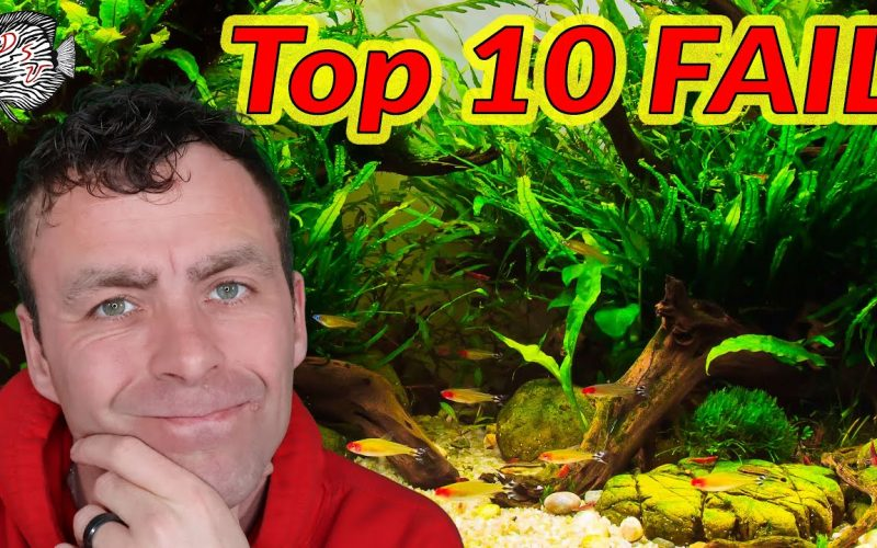 Top 10 aquarium fouten 3
