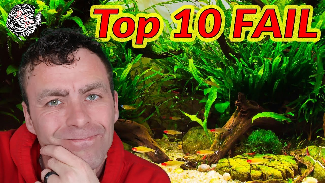 Top 10 aquarium fouten 2
