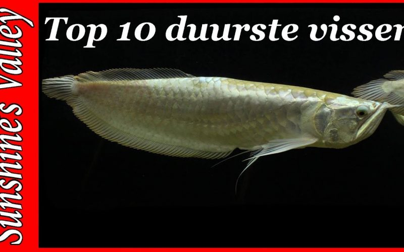 Top 10 duurste aquariumvissen 25