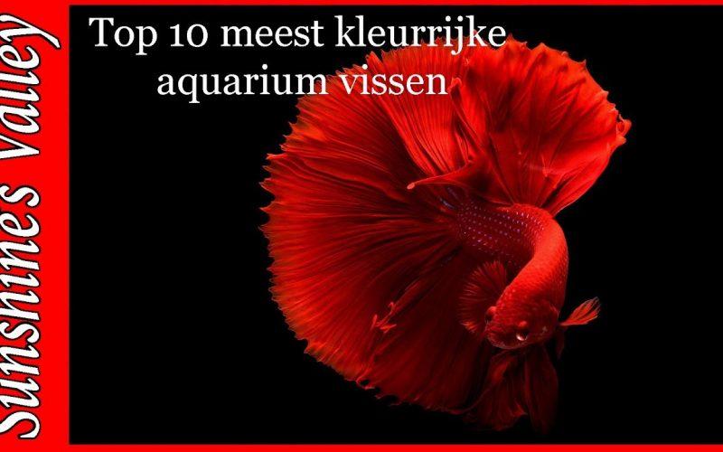 Top 10 kleurrijke aquariumvissen 2