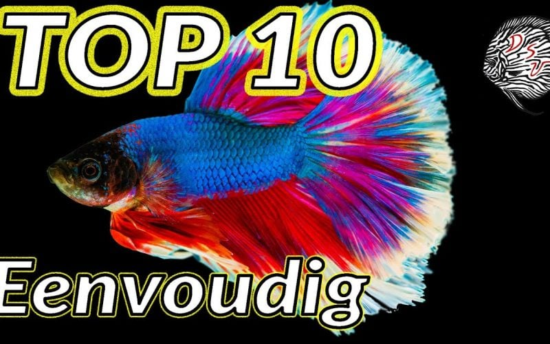 Top 10 makkelijke vissen 1
