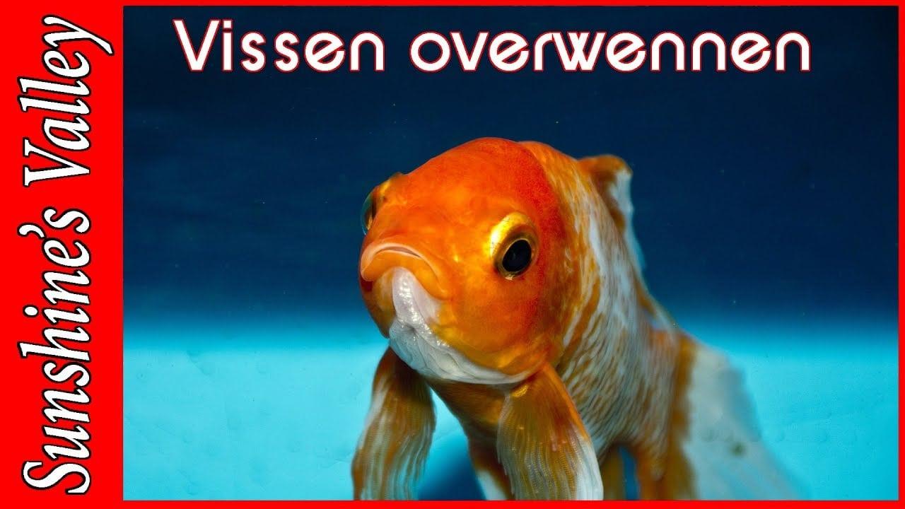 Vissen overzetten 1