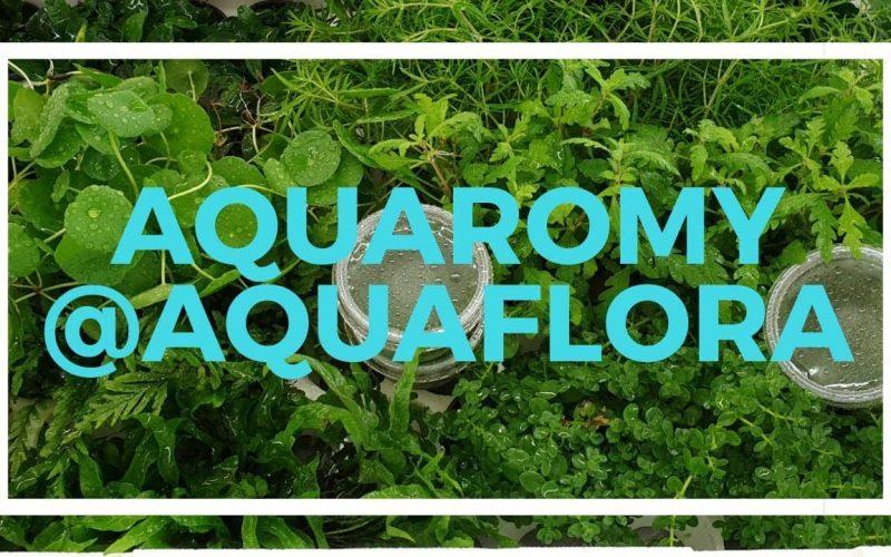 Aquaflora 12