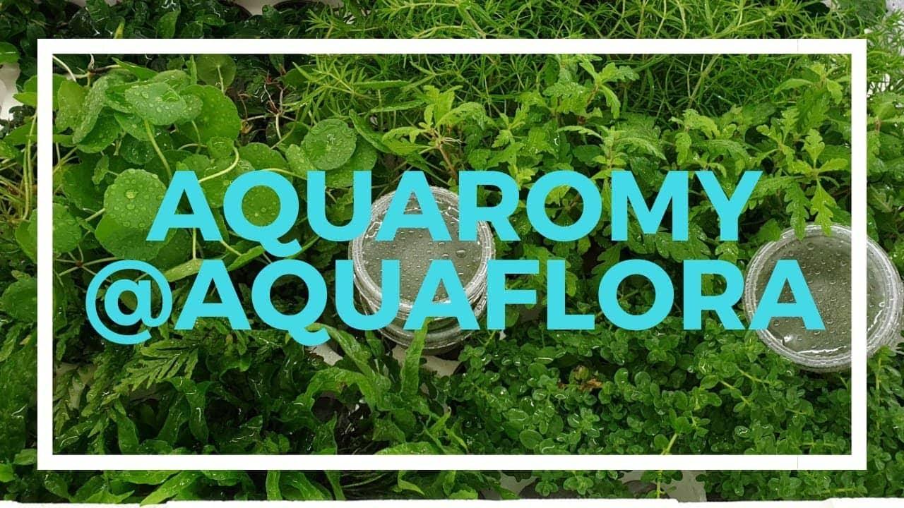Aquaflora 10