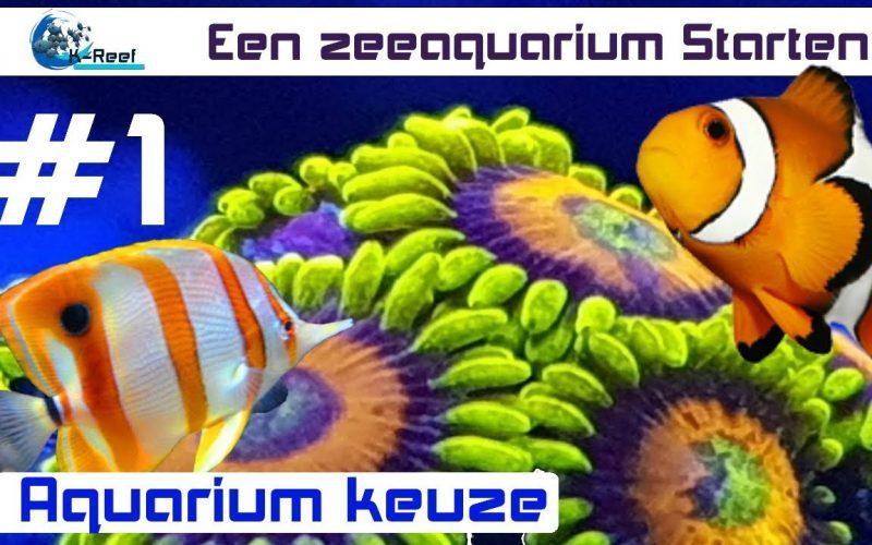 Het kiezen van een zeewater aquarium 1