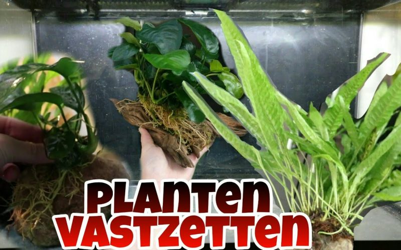 Planten vastzetten 1