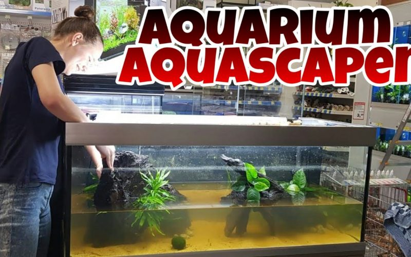 Aquascape Jumper Meppel 3