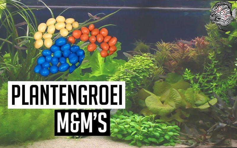 Plantengroei aquarium 7