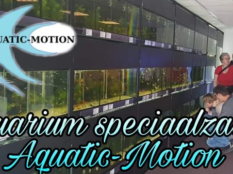 Aquatic-Motion 9