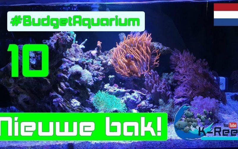Budget aquarium aflevering 10 12