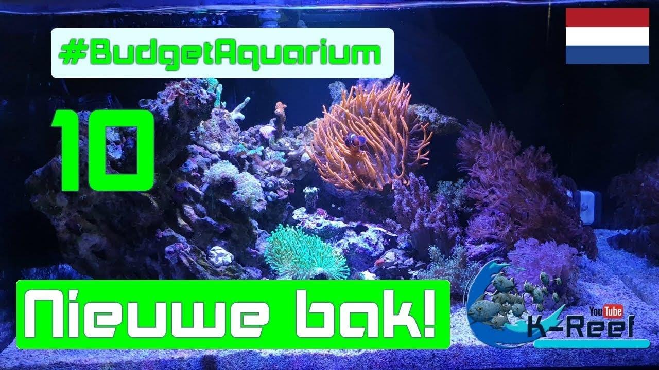 Budget aquarium aflevering 10 1