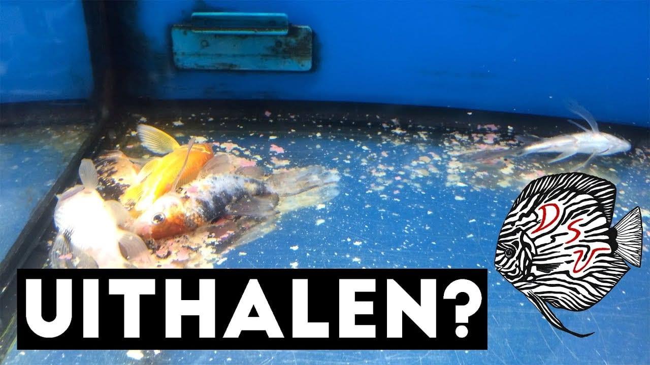 Dode vissen 1