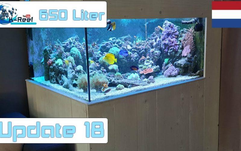 650L zoutwater update 10