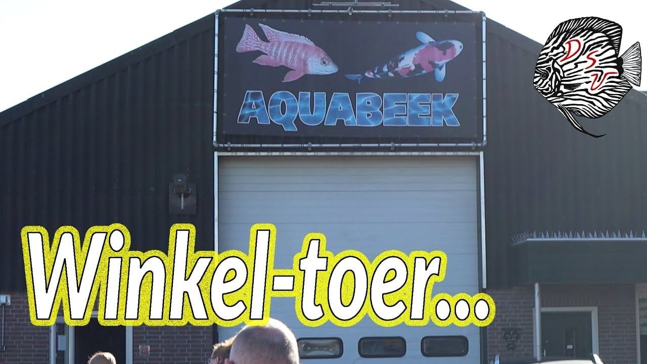Aquabeek in Handel 2