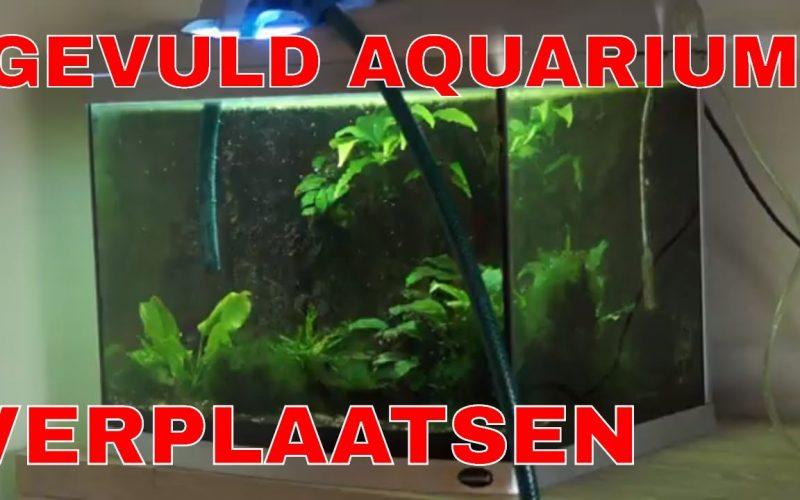 Aquarium verplaatsen 16