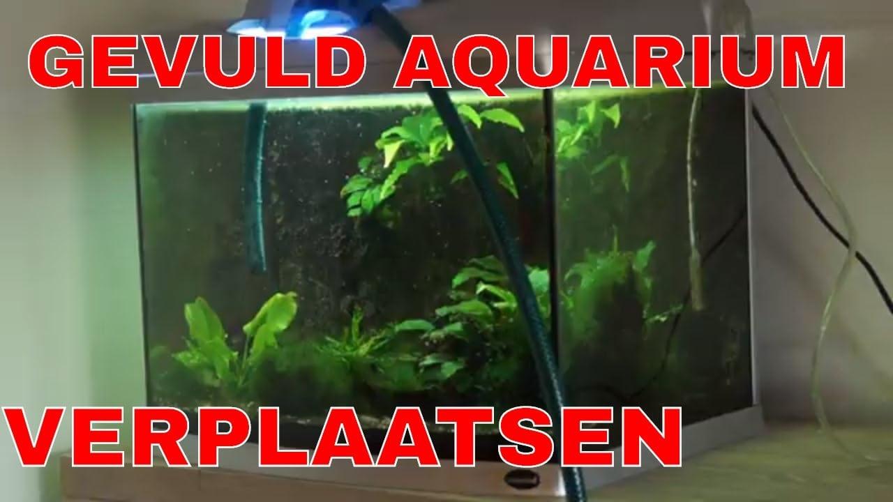 Aquarium verplaatsen 4