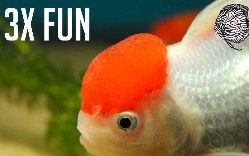 Aquarium winkels 1
