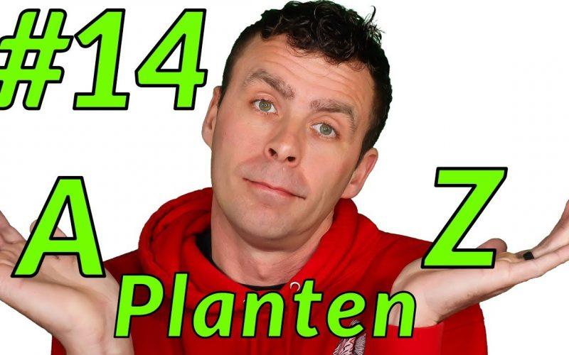 Aquariumplanten 1