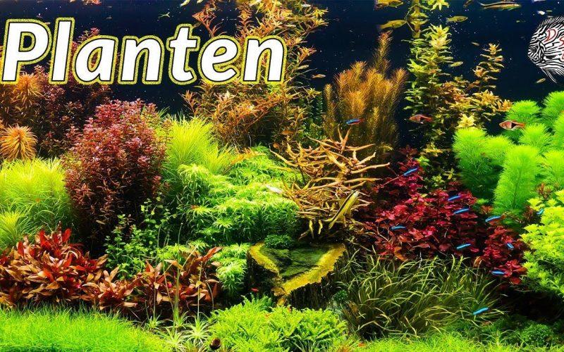 Aquariumplanten 3
