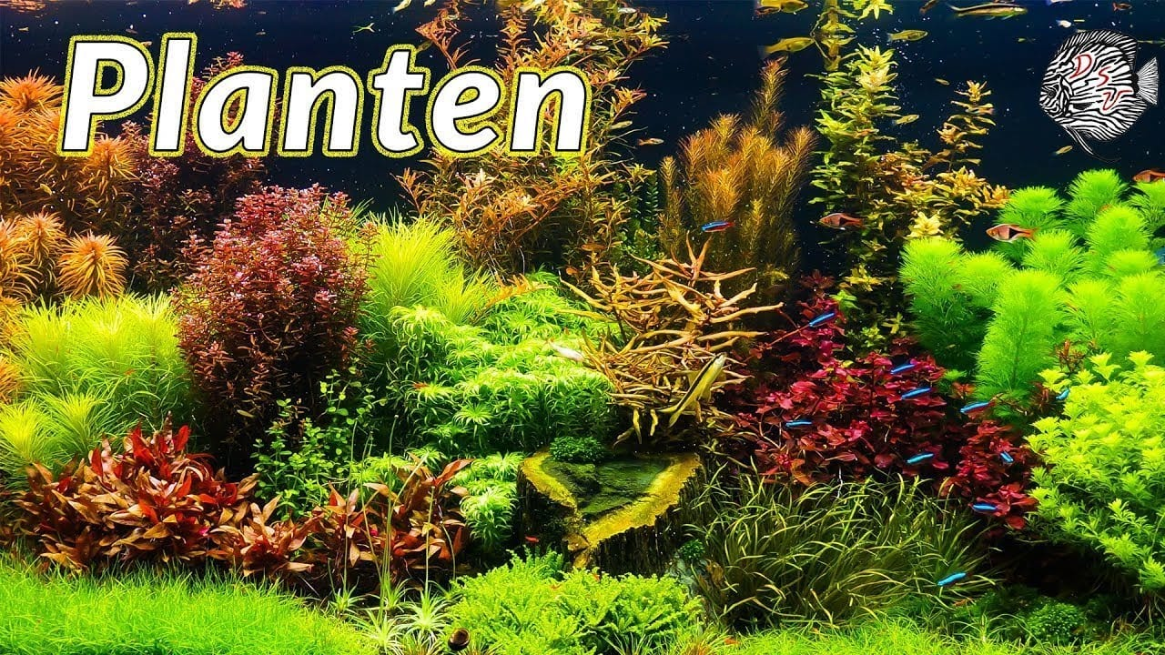 Aquariumplanten 2