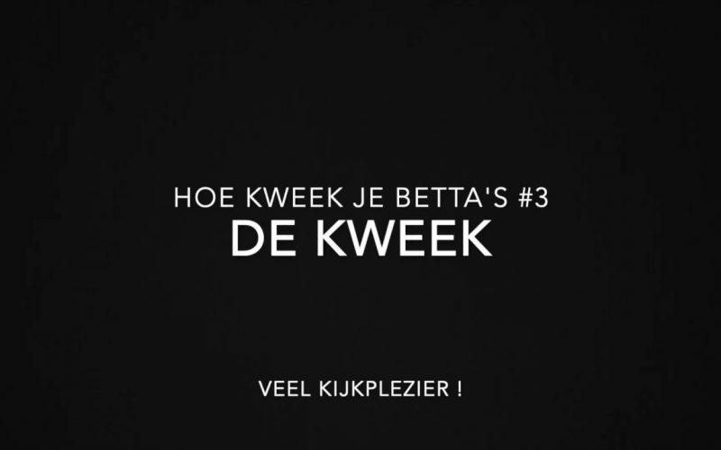 Betta's kweken 7