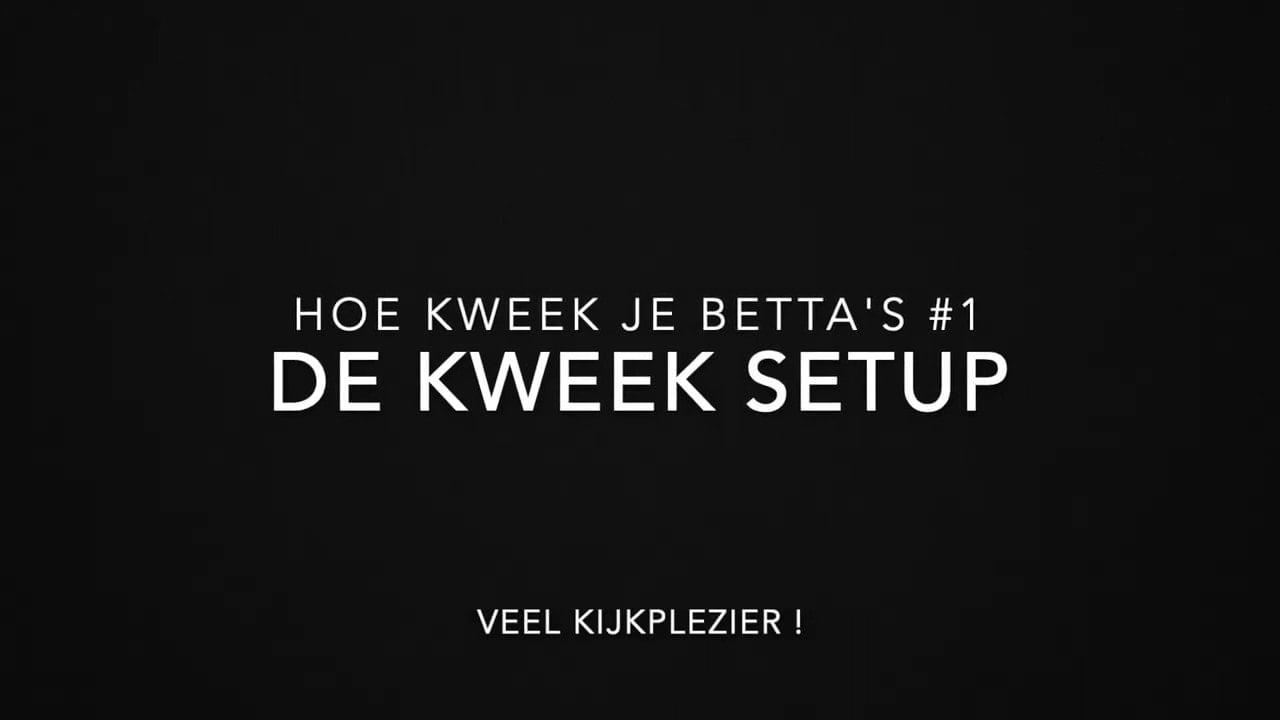 Betta kweek setup 4