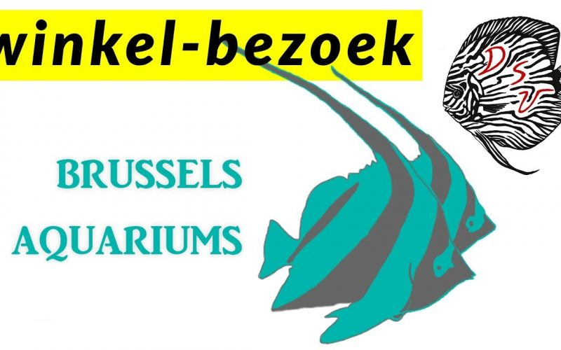 New Brussels Aquarium 6