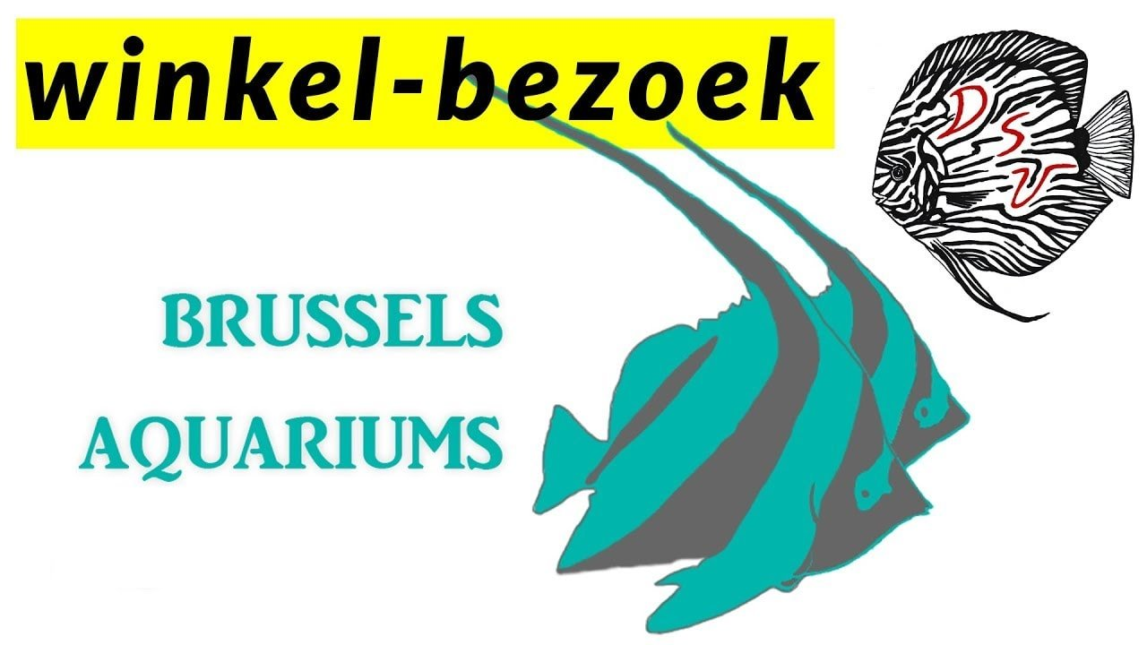 New Brussels Aquarium 3