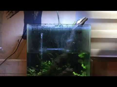 Onderhoud Betta aquarium 14