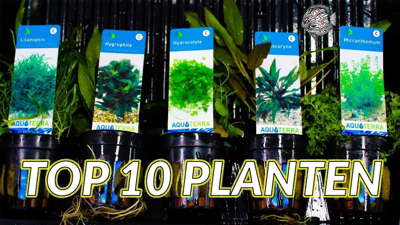 Top 10 aquariumplanten 3