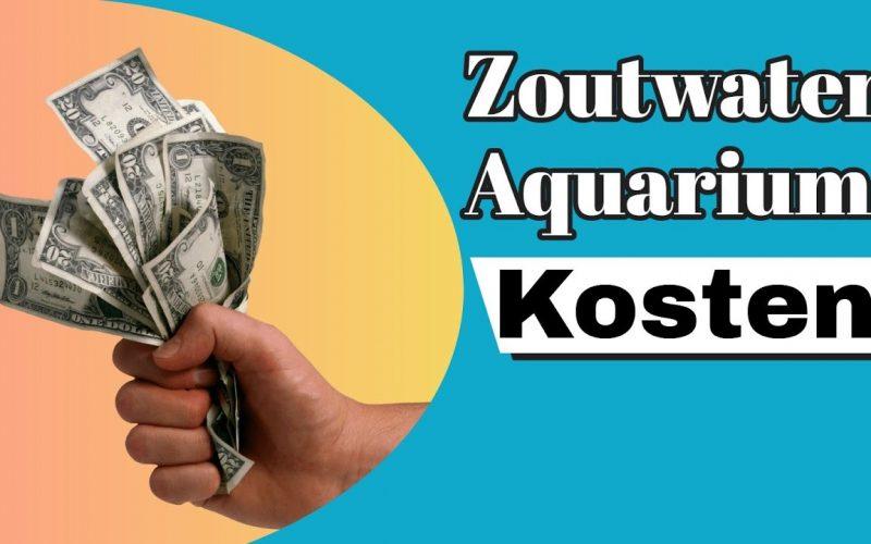 Wat kost een zeewater aquarium? 6