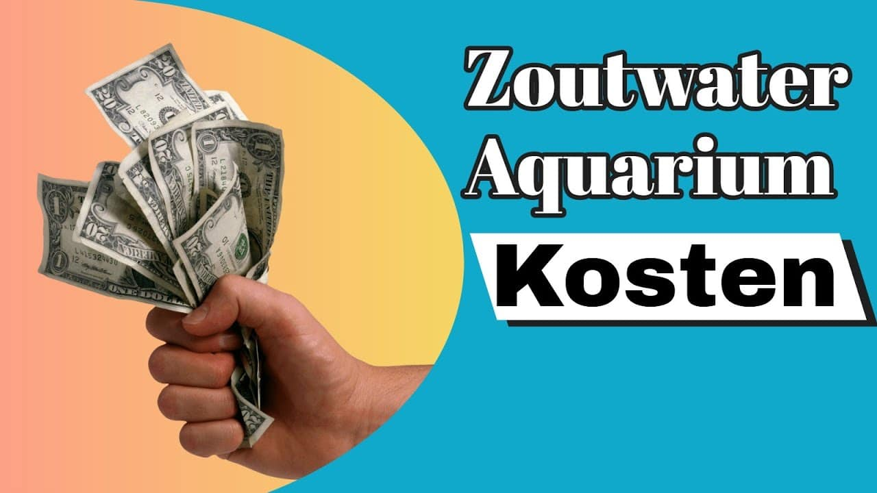 Wat kost een zeewater aquarium? 4