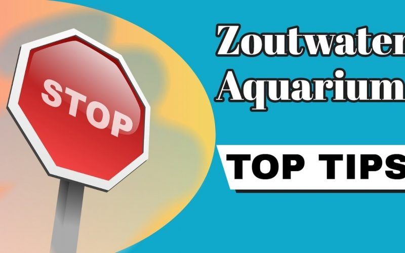 Zeewater aquarium tips 15