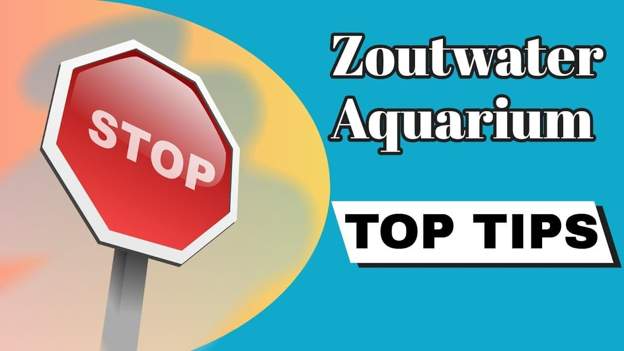 Zeewater aquarium tips 3