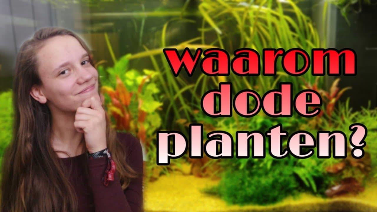 Nieuwe planten 7