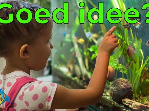 Aquarium voor kinderen 10