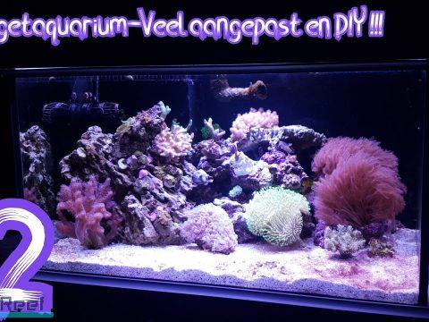 Budget aquarium deel 12 18