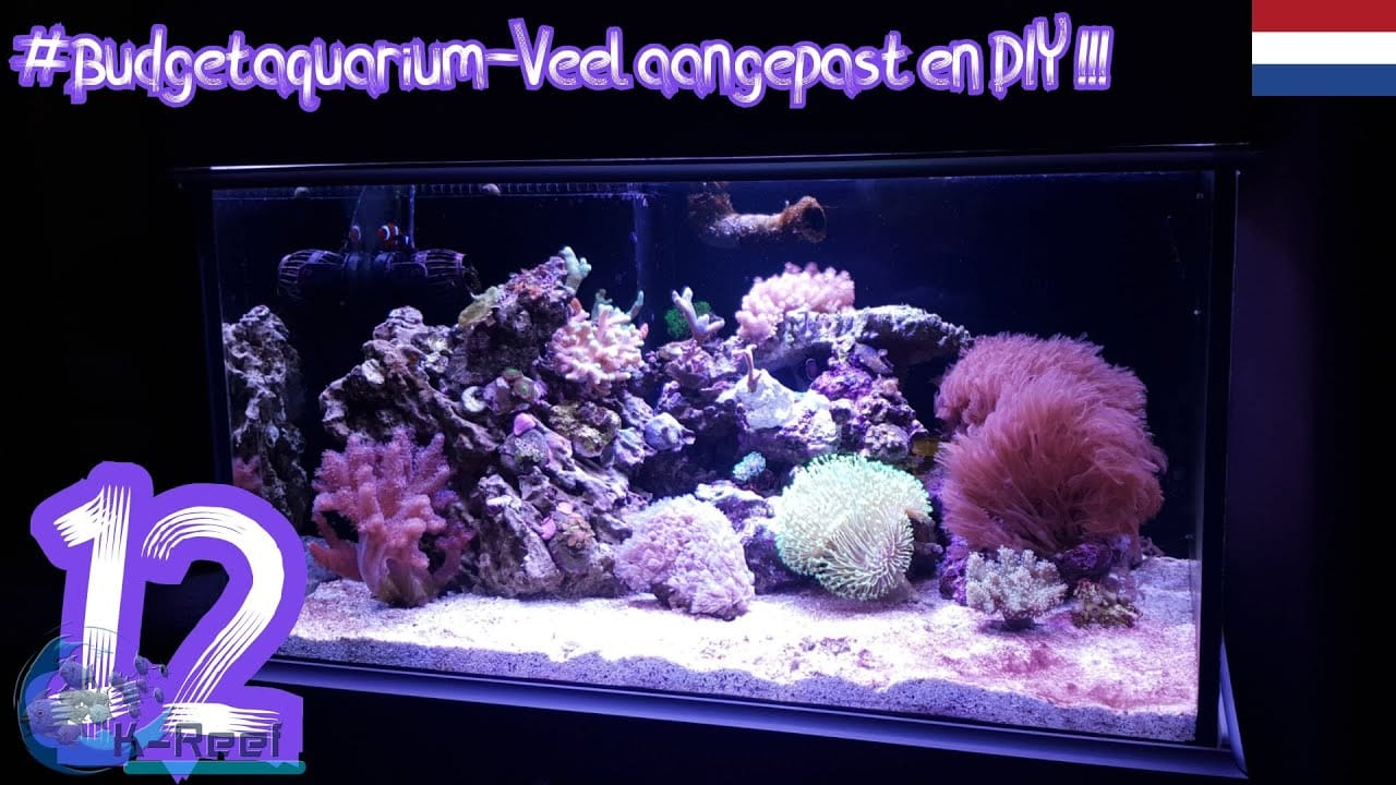 Budget aquarium deel 12 1