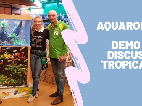 Aquascape Discus Tropica in Dieren 3