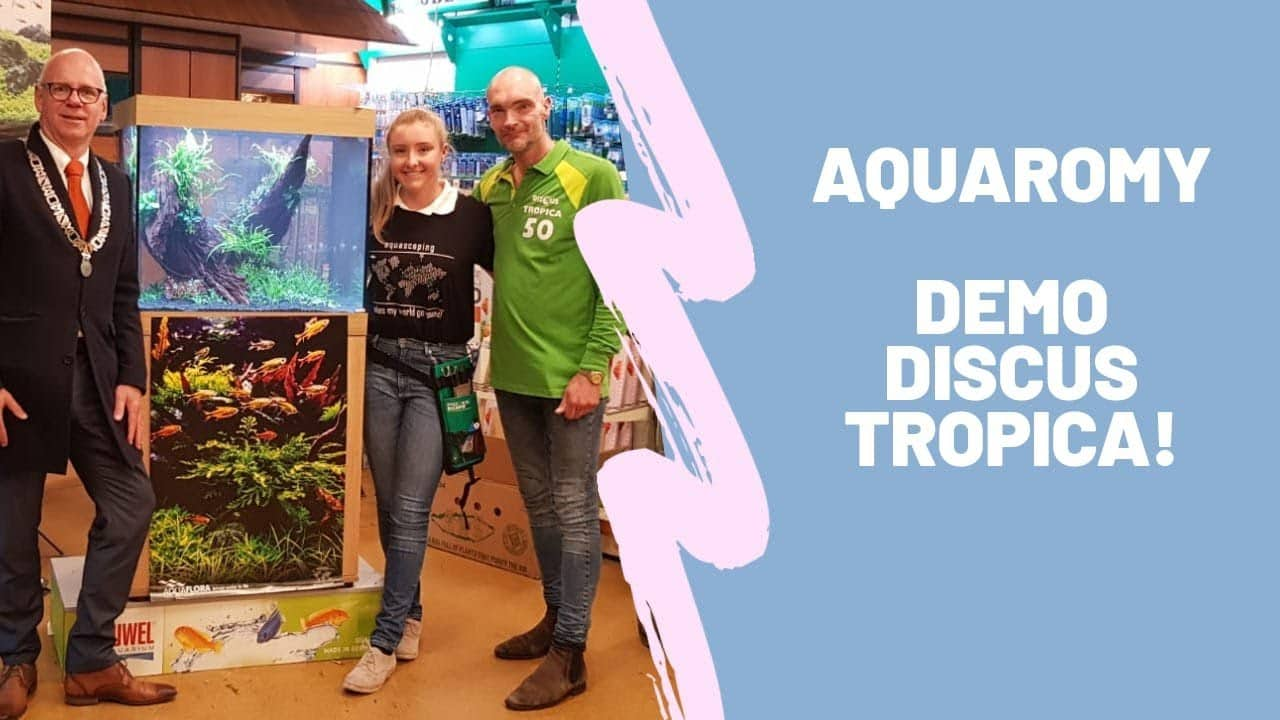 Aquascape Discus Tropica in Dieren 5