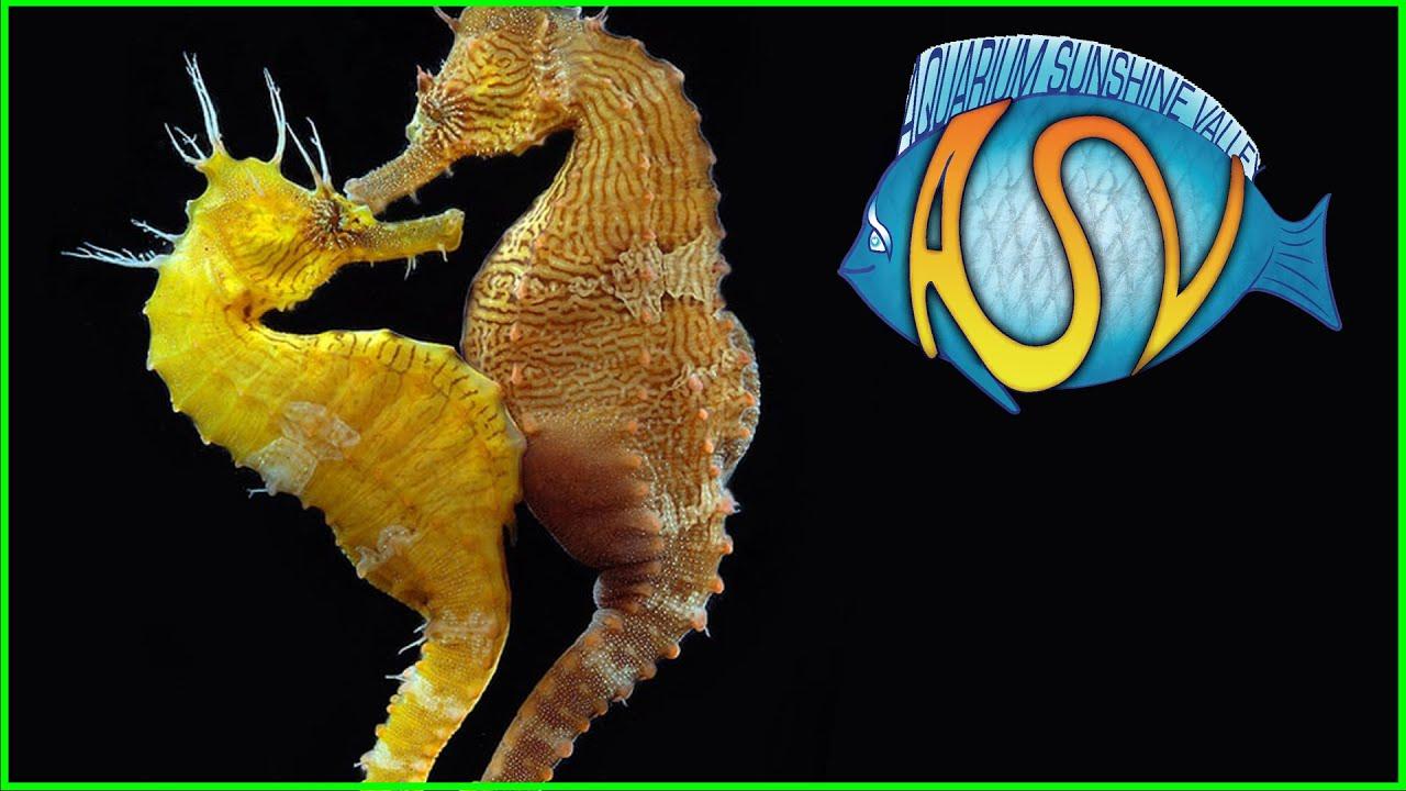 Kweken aquariumvissen 15