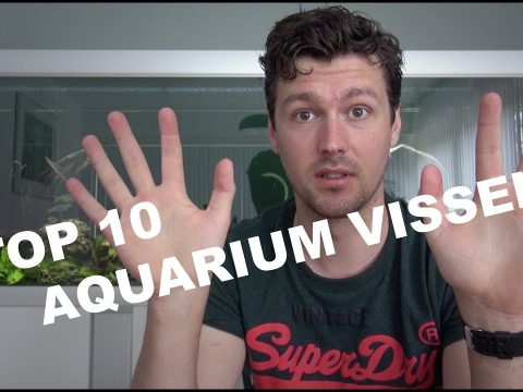 Top 10 agressieve aquariumvissen 9