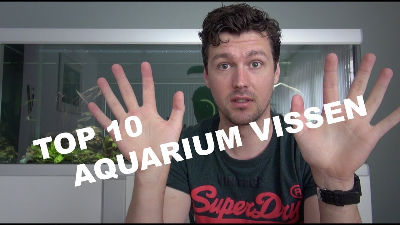Top 10 agressieve aquariumvissen 2