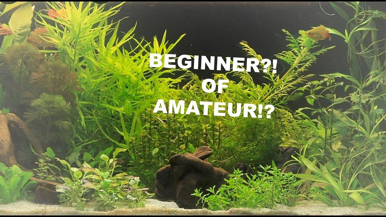 Makkelijke aquariumplanten 3