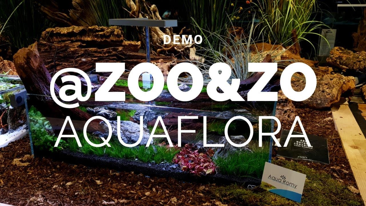 Zoo & zo aquascape 3