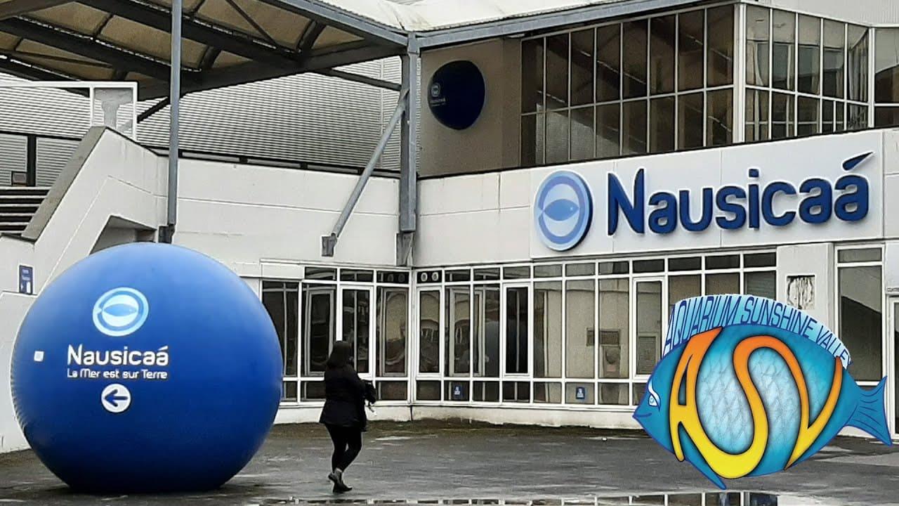 Nausicaa 1
