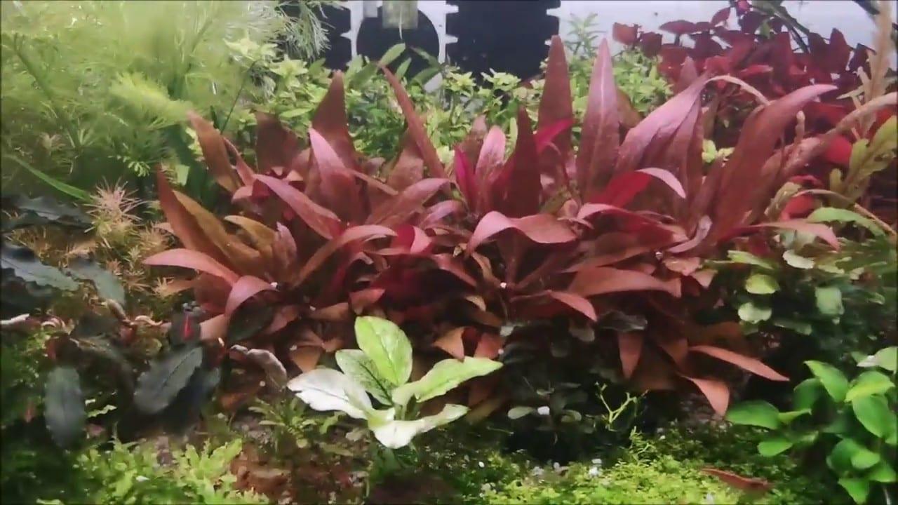 Planten snoeien 1