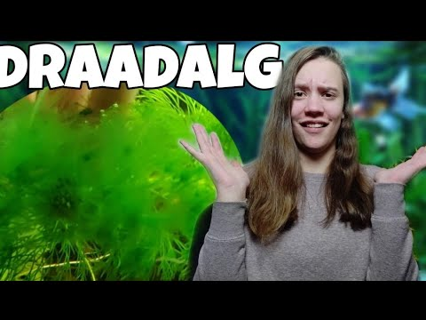 Draadalg 7