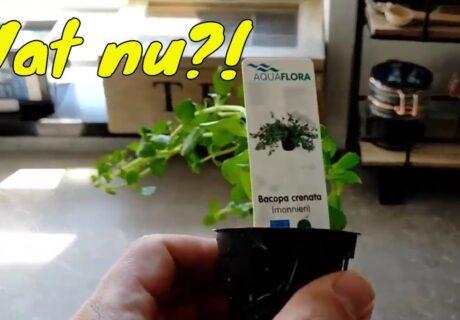 Aquariumplant planten 4