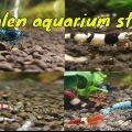 Hoe start je een garnalen aquarium op? 1